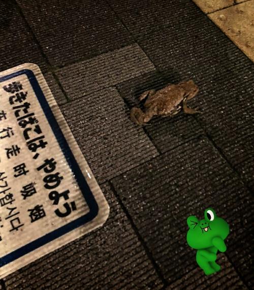 近所に蛙ちゃん!振りかえる!
