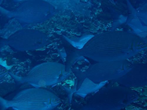 バリ島ダイビングの2本目〆です!