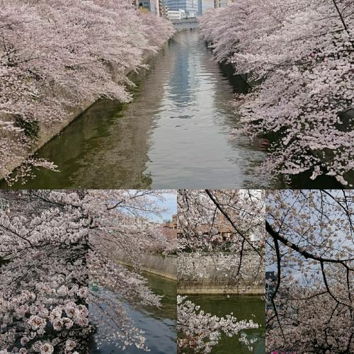 目黒川桜まつり(^-^)