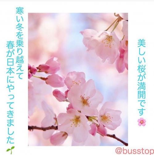 春が日本にやって来ました!