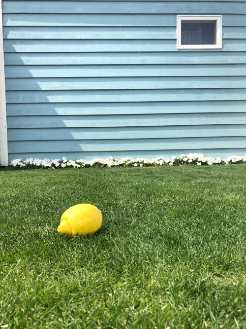 ガーデンスタジオ:現在の芝生のようす