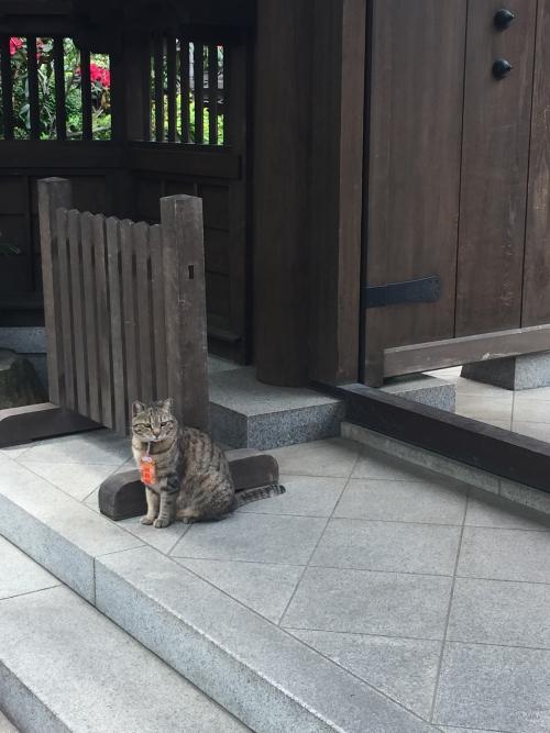 お守り猫ちゃん