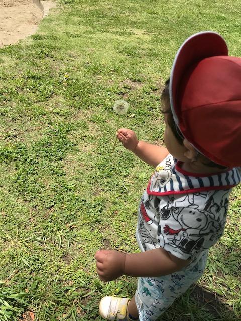 散歩 たんぽぽ 託児