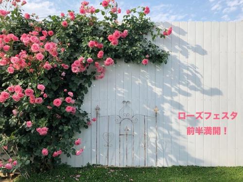 ガーデンプランタン:撮影ポイント4(前半満開)