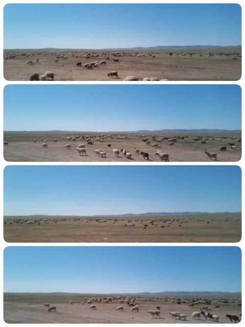 モンゴル大地 2