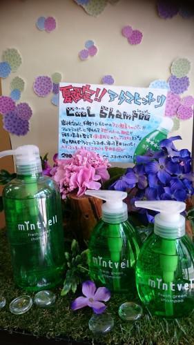 夏限定のスースーシャンプ―☆お客様からの差し入れ&お祝い☆