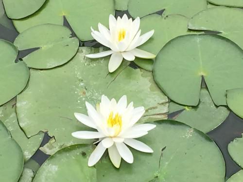 藤枝蓮華寺池公園は四季折々楽しめる公園です。