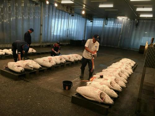 掛川とろろ本丸で使っているマグロは市場直送です。