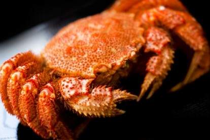 """5はい限定""""本日北海道より旬の毛蟹が入荷しました。"""
