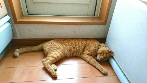 勝手口の猫(昨日の続き)