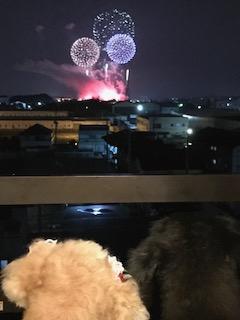 宇都宮花火大会を楽しみました。
