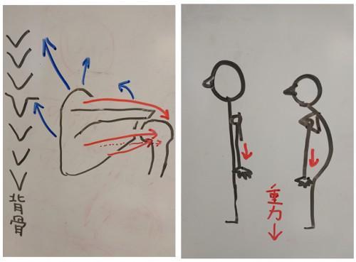 【新丸子】四十肩・五十肩への対策【武蔵小杉】