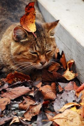 organic+autumn