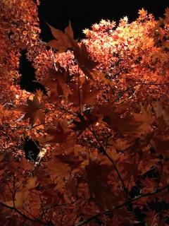 秋ですね!
