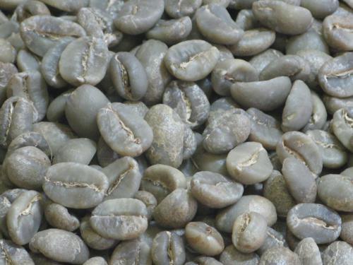 アラビカ種の品種と味の特徴
