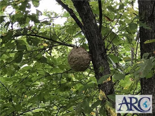 スズメバチの活動期は7月~10月!気をつけてください!!