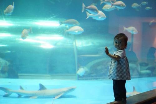 初めての水族館