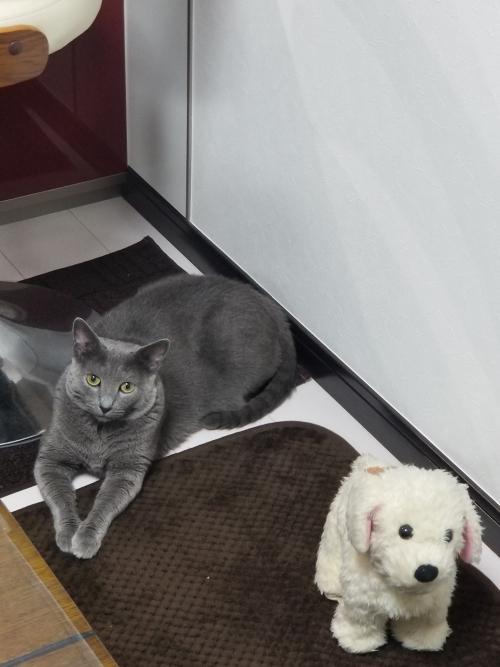猫とワンコ MAI