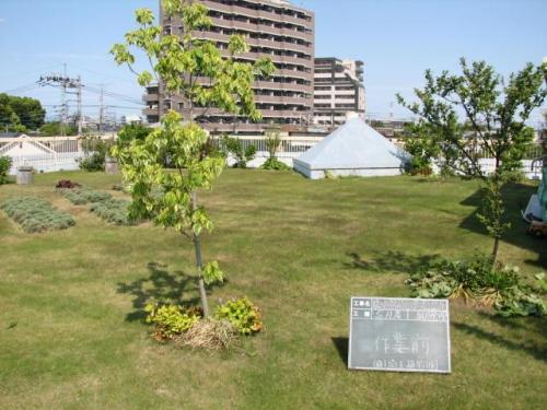 屋上緑化の決定版!安行四季彩マットの5月な風景!