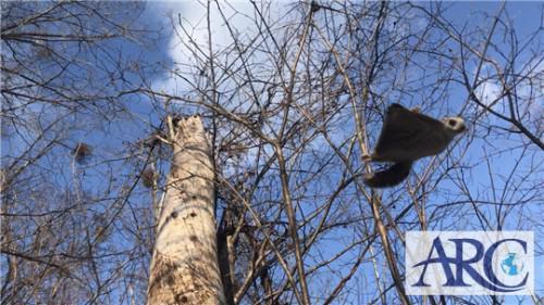 道東方面!奇跡!土地買取りスタッフが空飛ぶモモンガに遭遇!