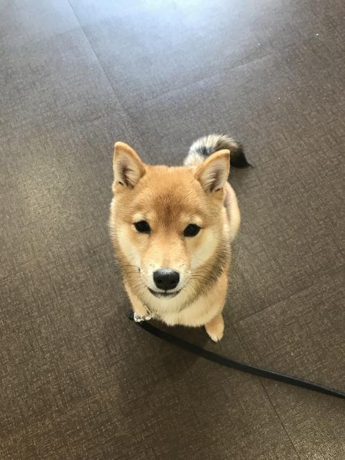 ナイスレポンド新人犬