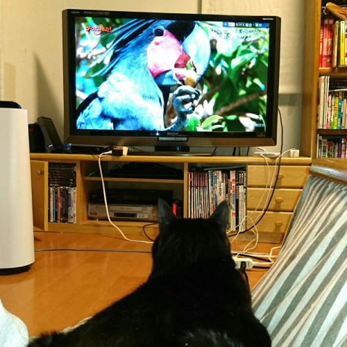 久々にテレビを見る