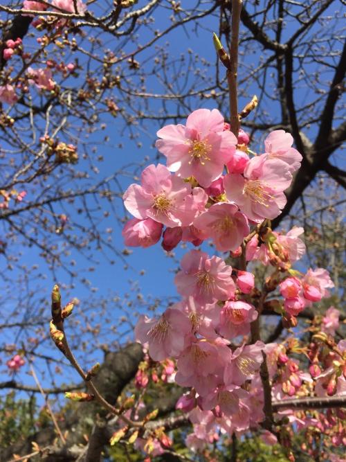 春はすぐそこ!