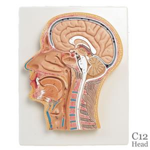 発声障害は発声の二次的な癖、矯正できます
