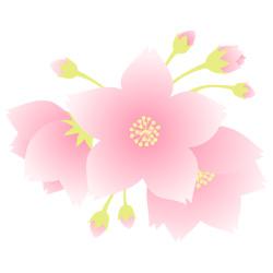 お花見 桜満開