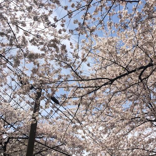 春フレンチネイル