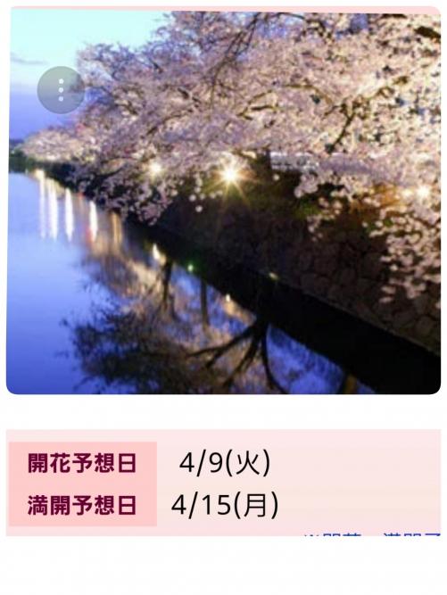 桜はまだまだ見れます