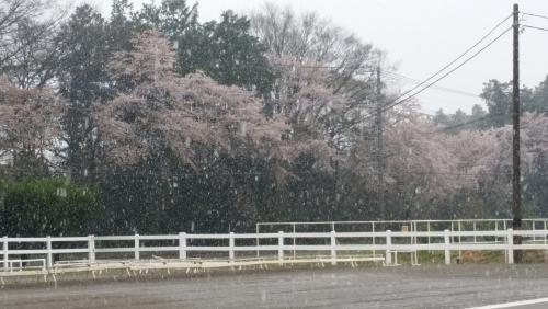 名残り?雪