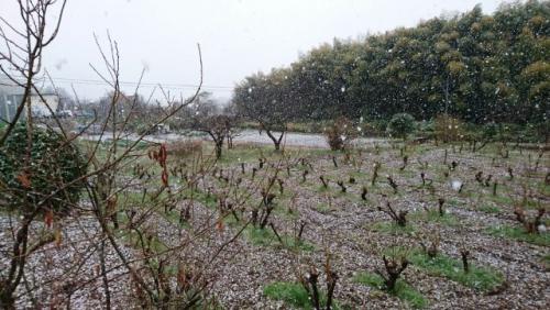 昭和最後の4月も雪が降りました