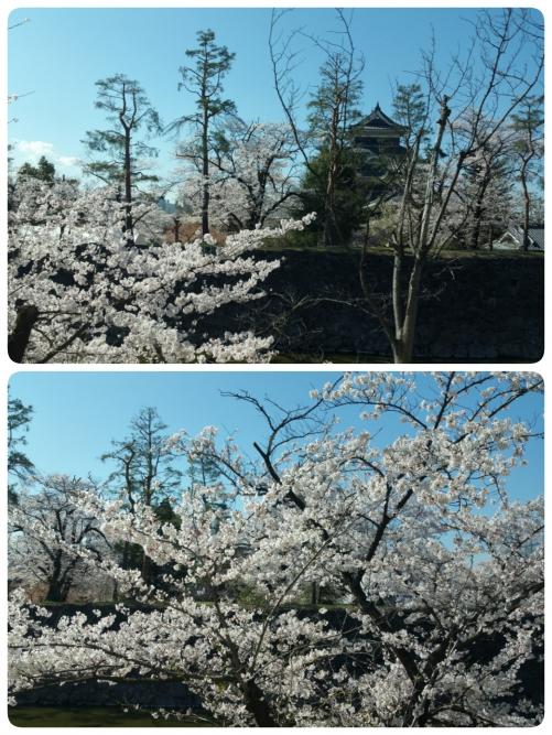 バスの中~桜