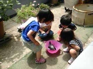 お池のお掃除ファミリー託児所の亀のカメ太郎