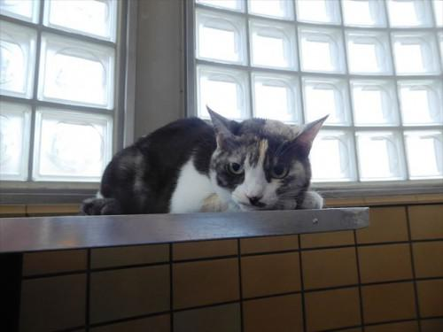 5/21トリミング 和猫、ミックス 動物病院 名古屋市緑区