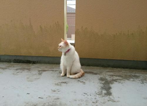 近づく雨の匂いでも嗅いでいるのか