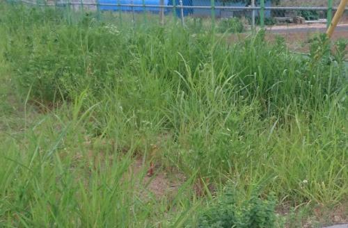 【除草作業で安全確保】防犯対策 除草 草刈り 見沼区