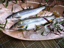 栃木・那珂川の天然鮎が入荷しました!
