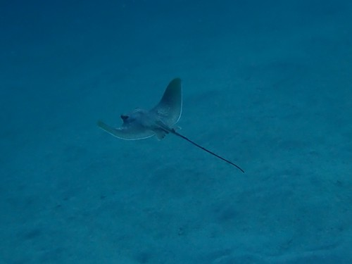 2019.06.08 富戸:海洋実習&2ビーチダイビング