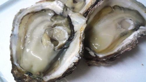 岩がき・岩牡蠣!!徳島県産。濃厚な味わいです。