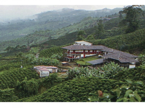 徹底品質管理の高品質の豆のみを使用 スペシャリティーコーヒー
