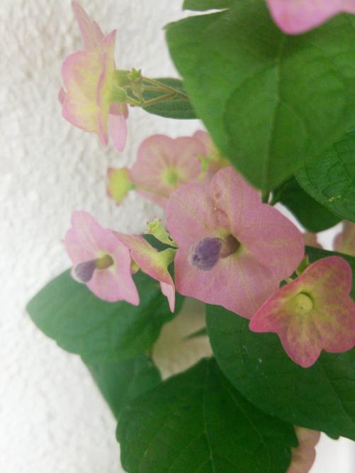 リンパサロン最近のお花