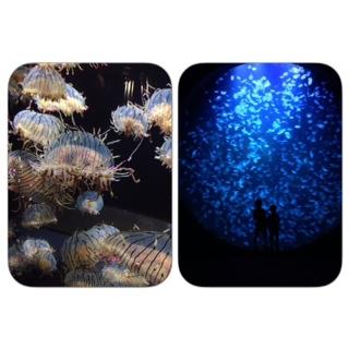 クラゲの加茂水族館に行ってきました。