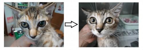 ネコの斜頸~神経障害~