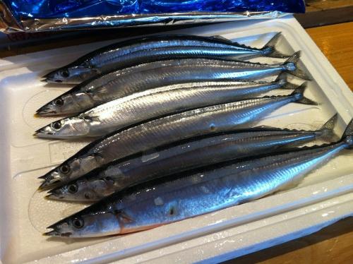 新秋刀魚はじめました。