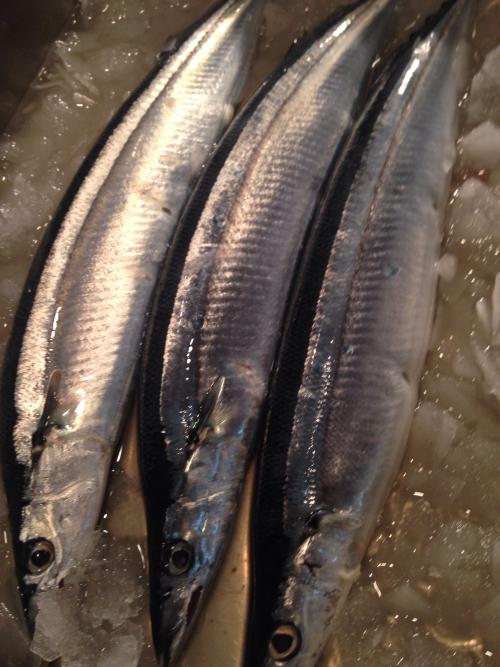 新秋刀魚‼︎