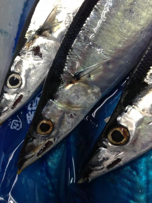 ほんでもちろん新秋刀魚!