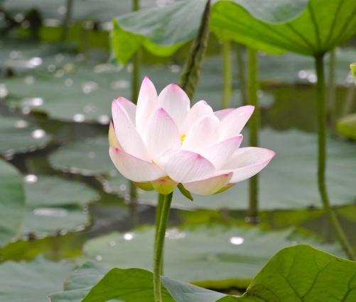 タイ古式マッサージロータス11月~12月のお休み