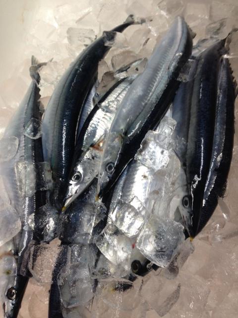 新秋刀魚 新サンマ 新さんま